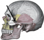 faq:zygomatic_arch.png